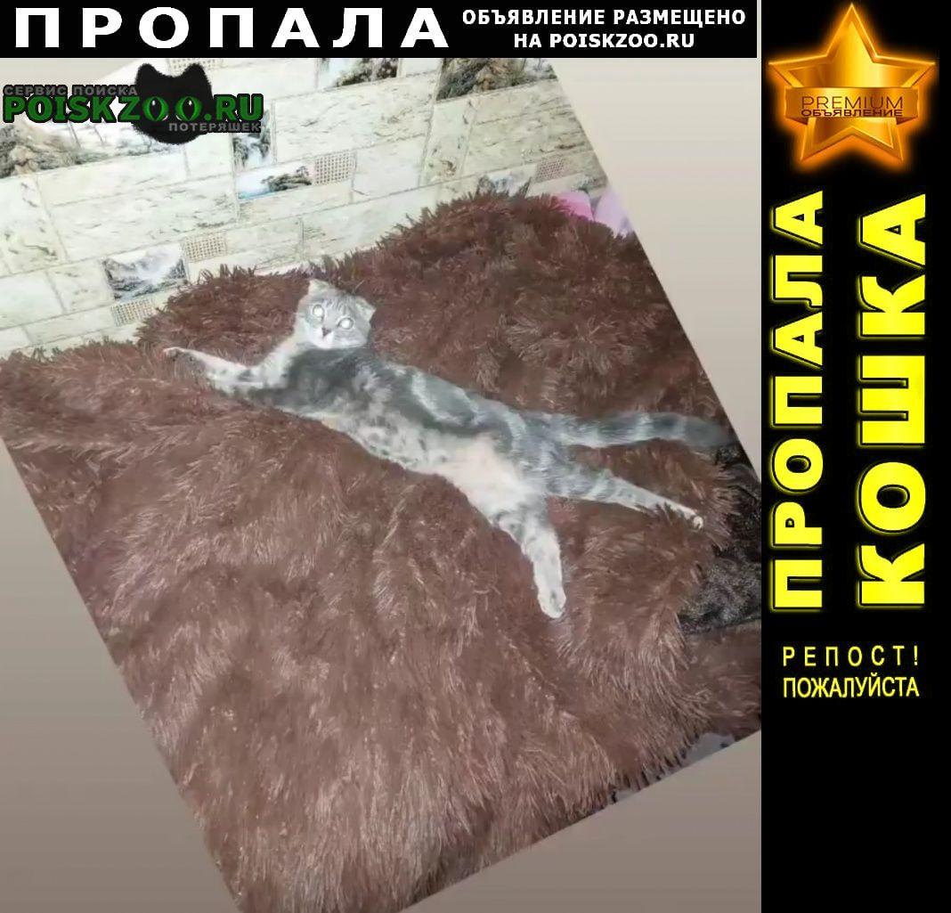 Пропала кошка вислоухая, худенькая, зовут симба. Самара
