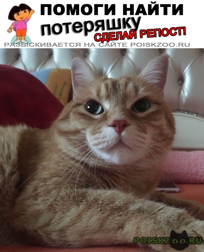 Пропал кот в посёлке родники г.Одинцово