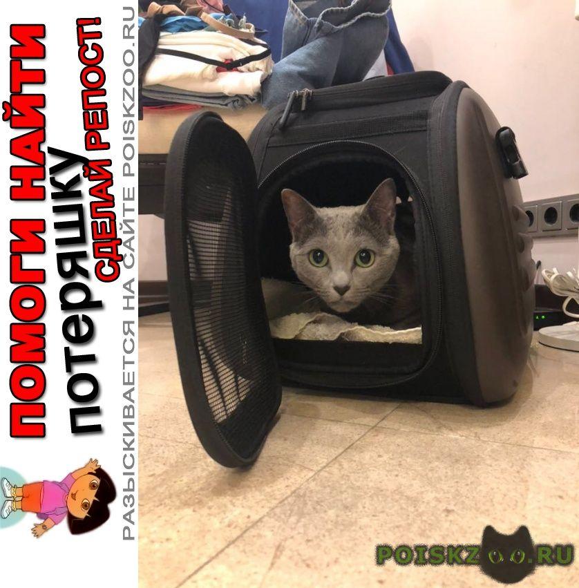 Пропала кошка помогите найти кошку г.Серпухов