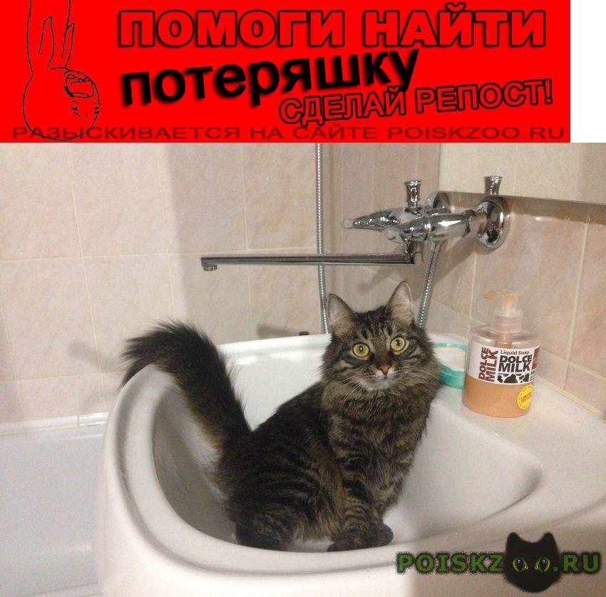 Пропала кошка г.Ковров
