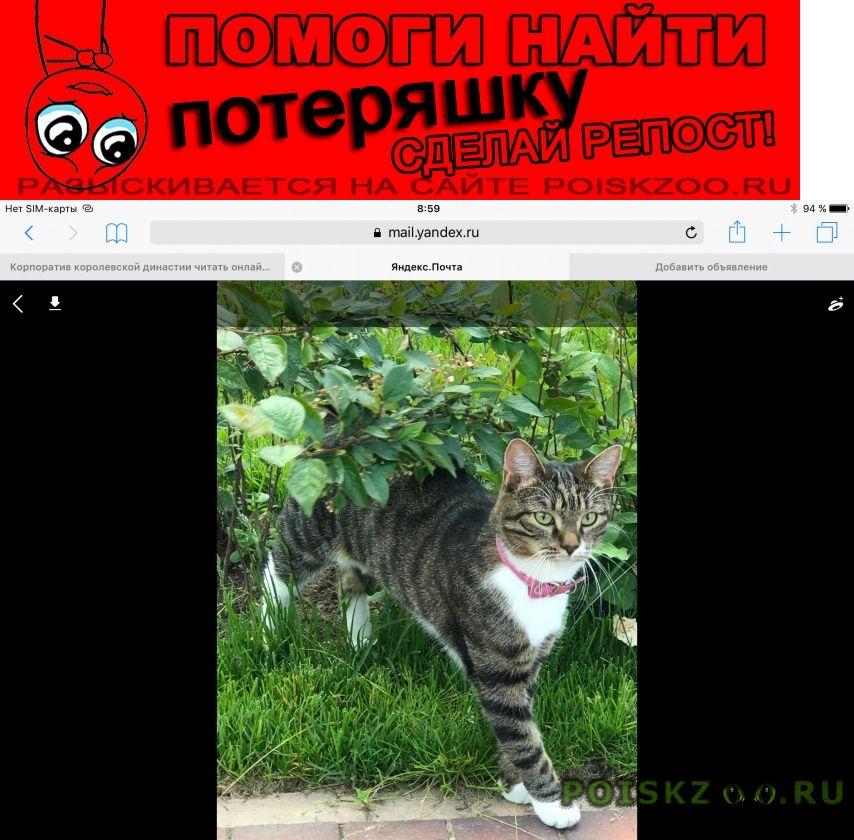 Пропала кошка г.Первомайский (Московская обл.)