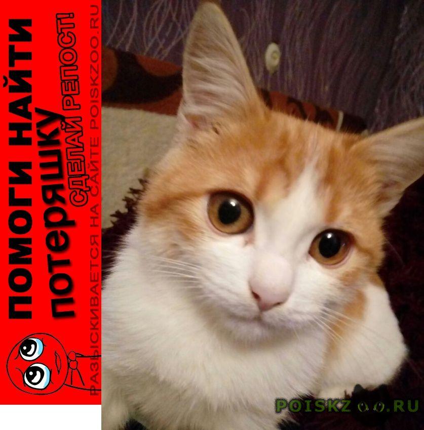 Пропала кошка г.Азов