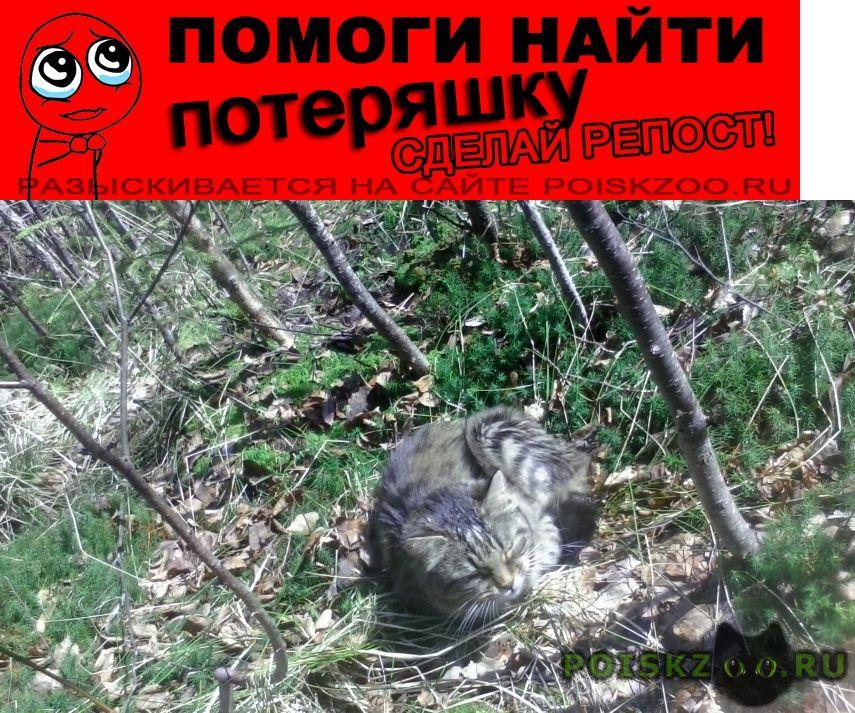 Пропала кошка с поводком и ошейником г.Петродворец