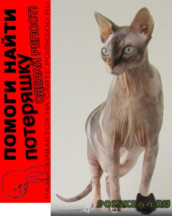 Пропала кошка породы сфикс г.Москва