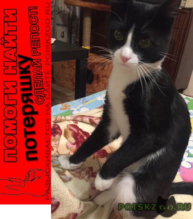 Пропал кот красивый локки г.Москва