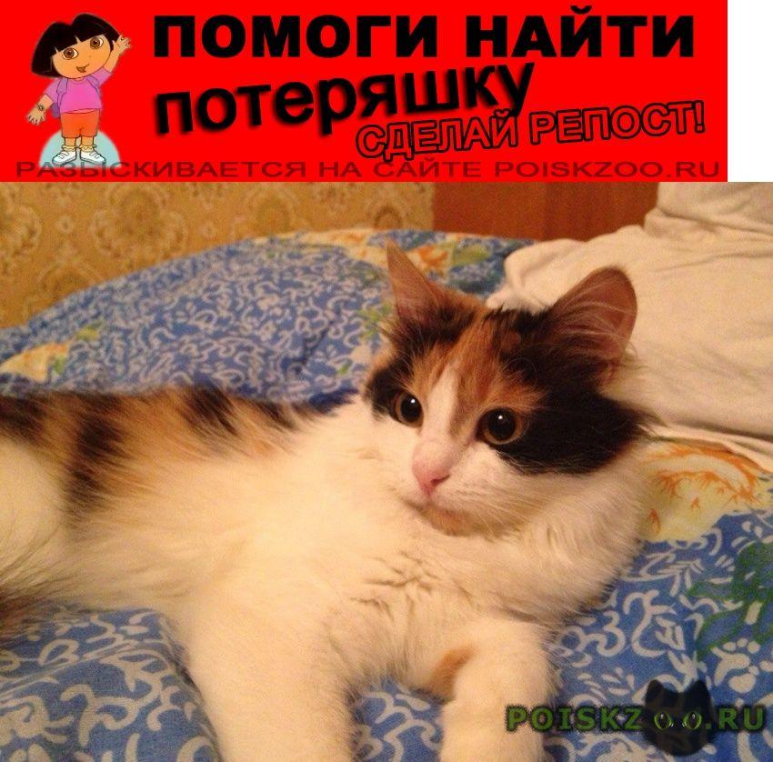 Пропала кошка санкт петербург спортивная г.Санкт-Петербург