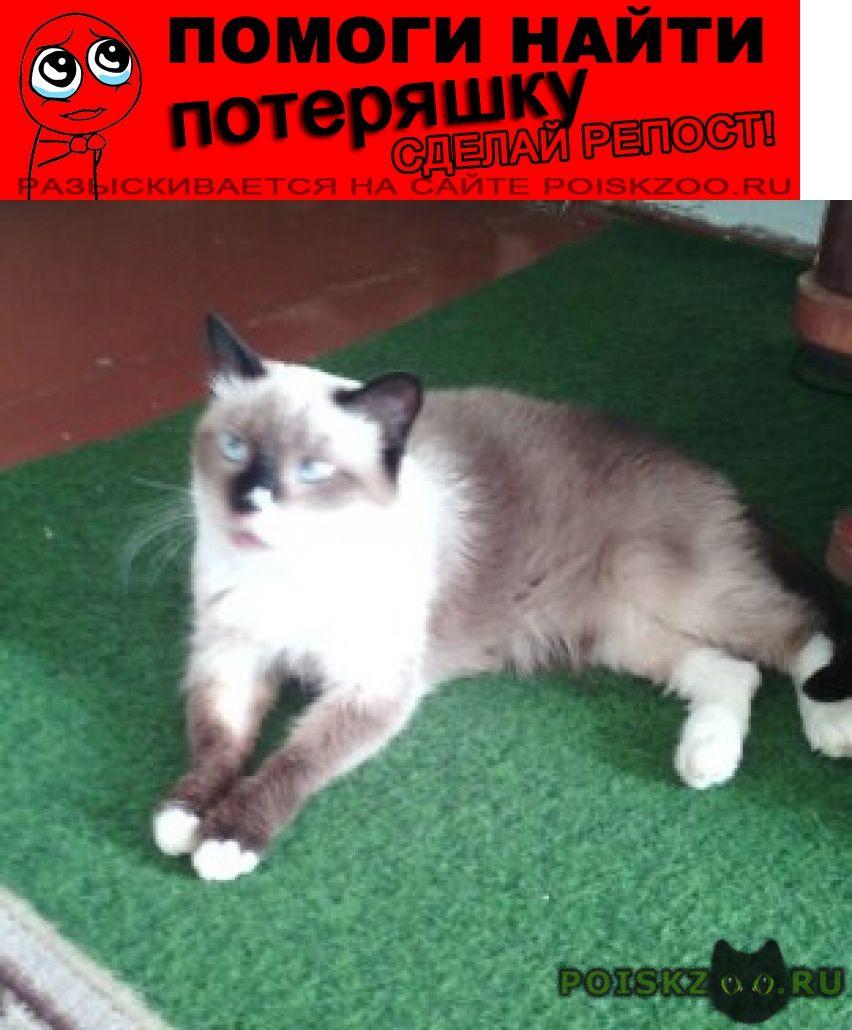Пропала кошка помогите найти кошечку г.Барнаул