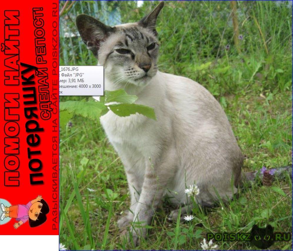 Пропал кот сиамский ориентальной группы 13лет г.Малоярославец