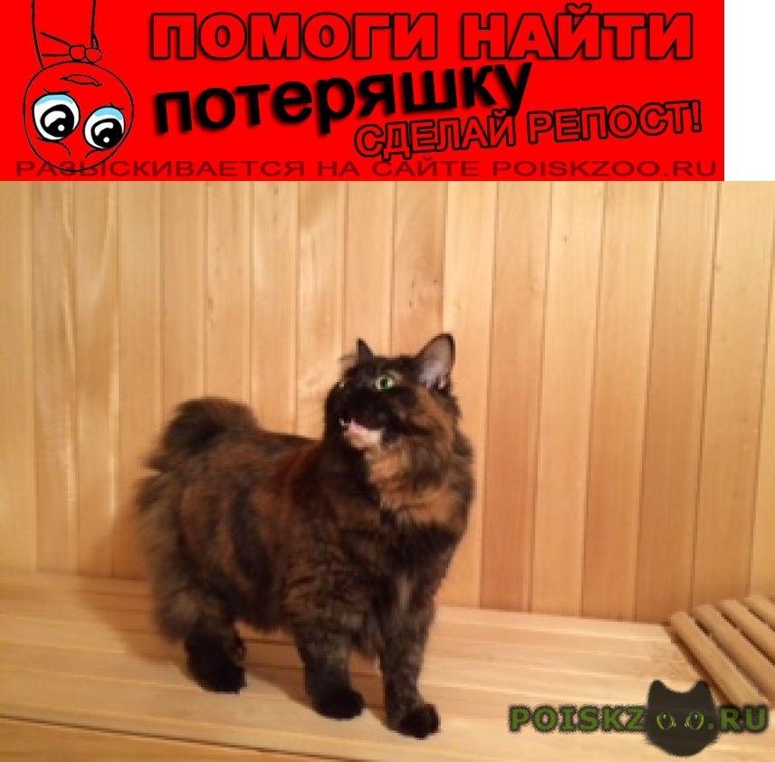 Пропала кошка черепаха курильский бобтейл г.Сергиев Посад