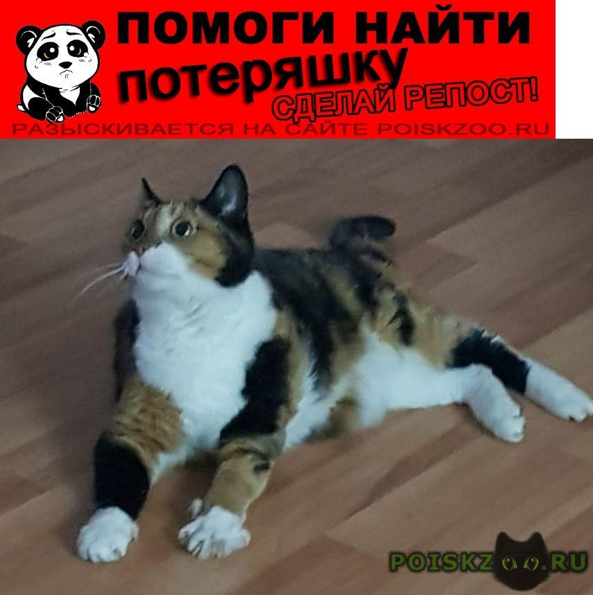Пропала кошка в с. курлек ой области г.Томск