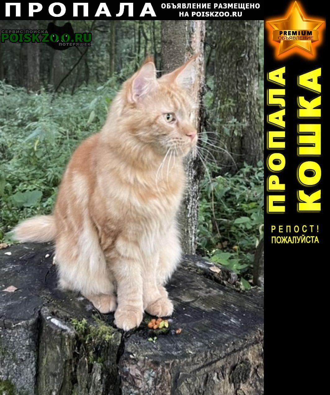 Пропал кот в середниково Фирсановка