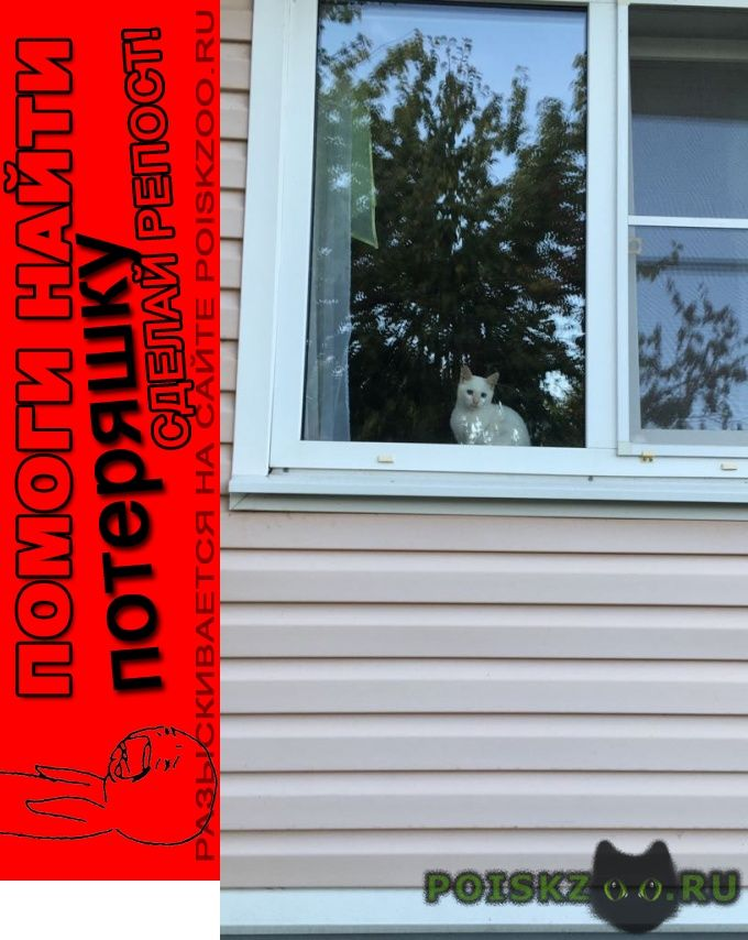 Пропала кошка котёнок 4 месяца г.Дорохово