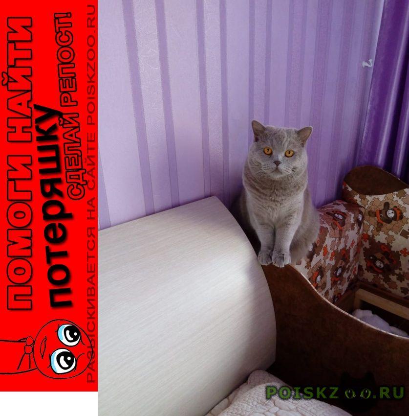 Пропал кот г.Томск