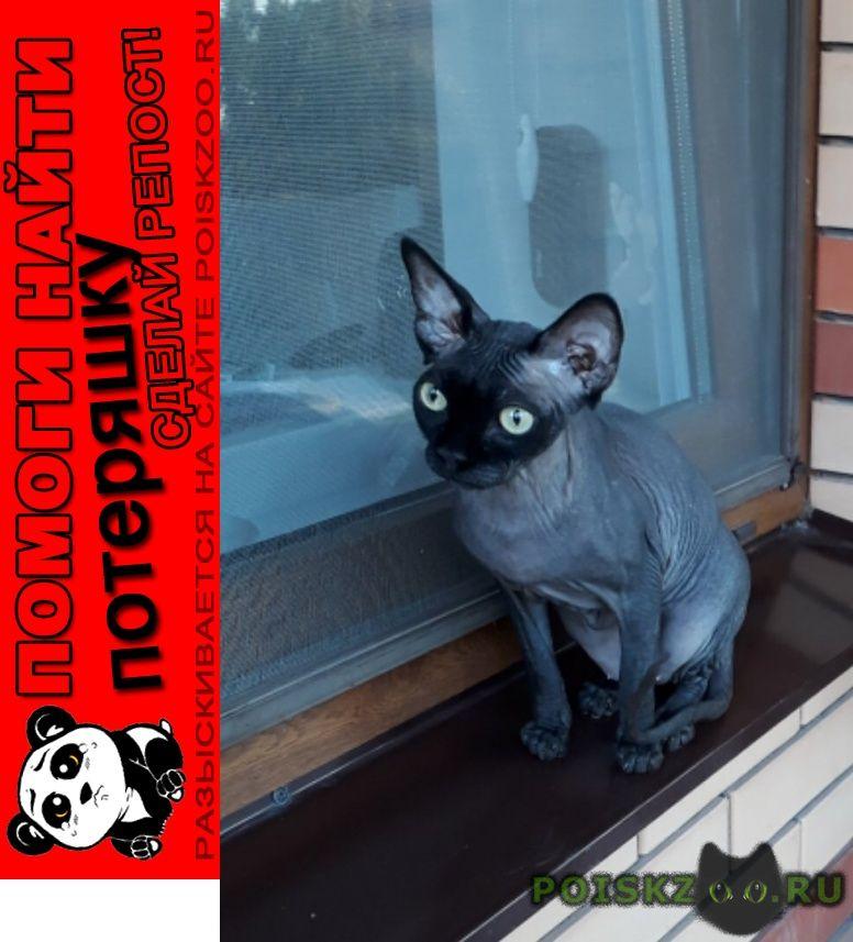 Пропал кот мальчик сфинкс г.Краснодар