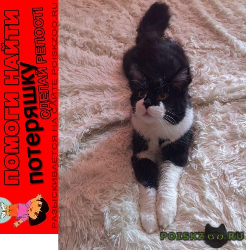 Пропал кот член семьи-породы мейнкун г.Икша