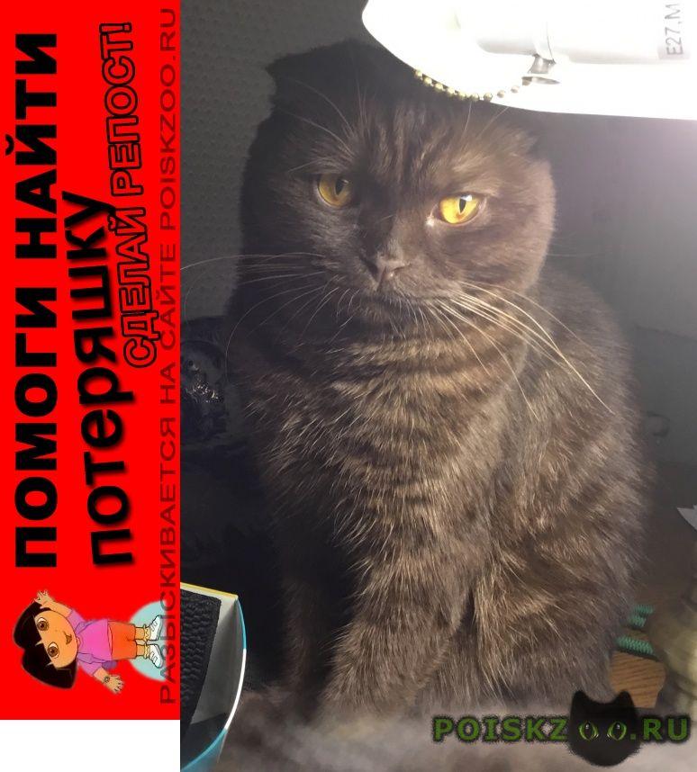 Пропала кошка г.Раменское