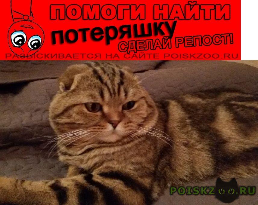 Пропал кот вислоухий г.Москва