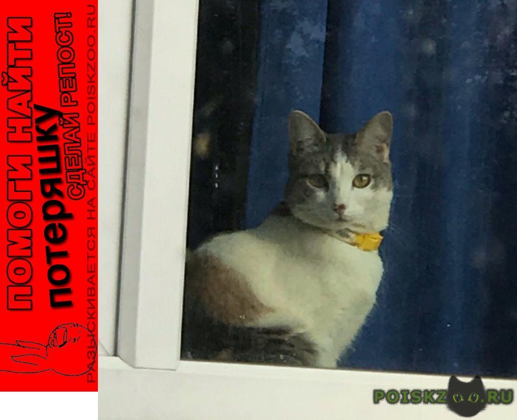 Пропала кошка вознаграждение 20 000 руб  г.Истра
