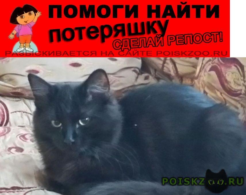 Пропал кот фырка г.Фирсановка