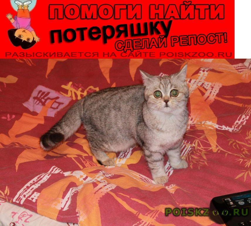 Пропала кошка г.Хохольский