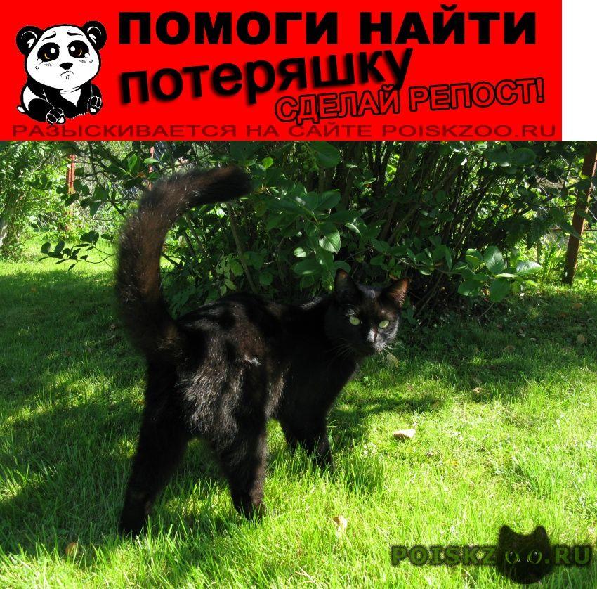 Пропал кот шон г.Москва