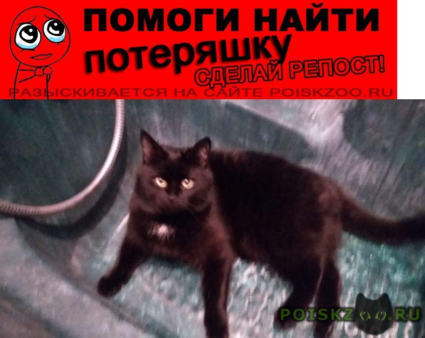 Пропал кот черный г.Коломна