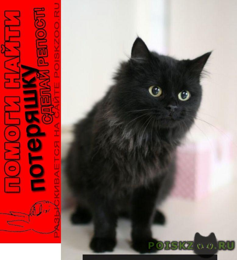 Пропала кошка помогите найти кошку г.Апрелевка