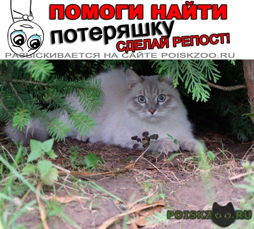 Пропал кот невский маскарадный г.Казань