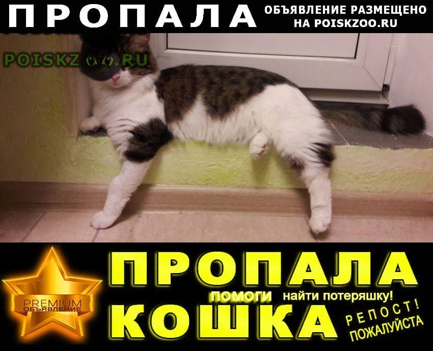 Пропал кот г.Видное