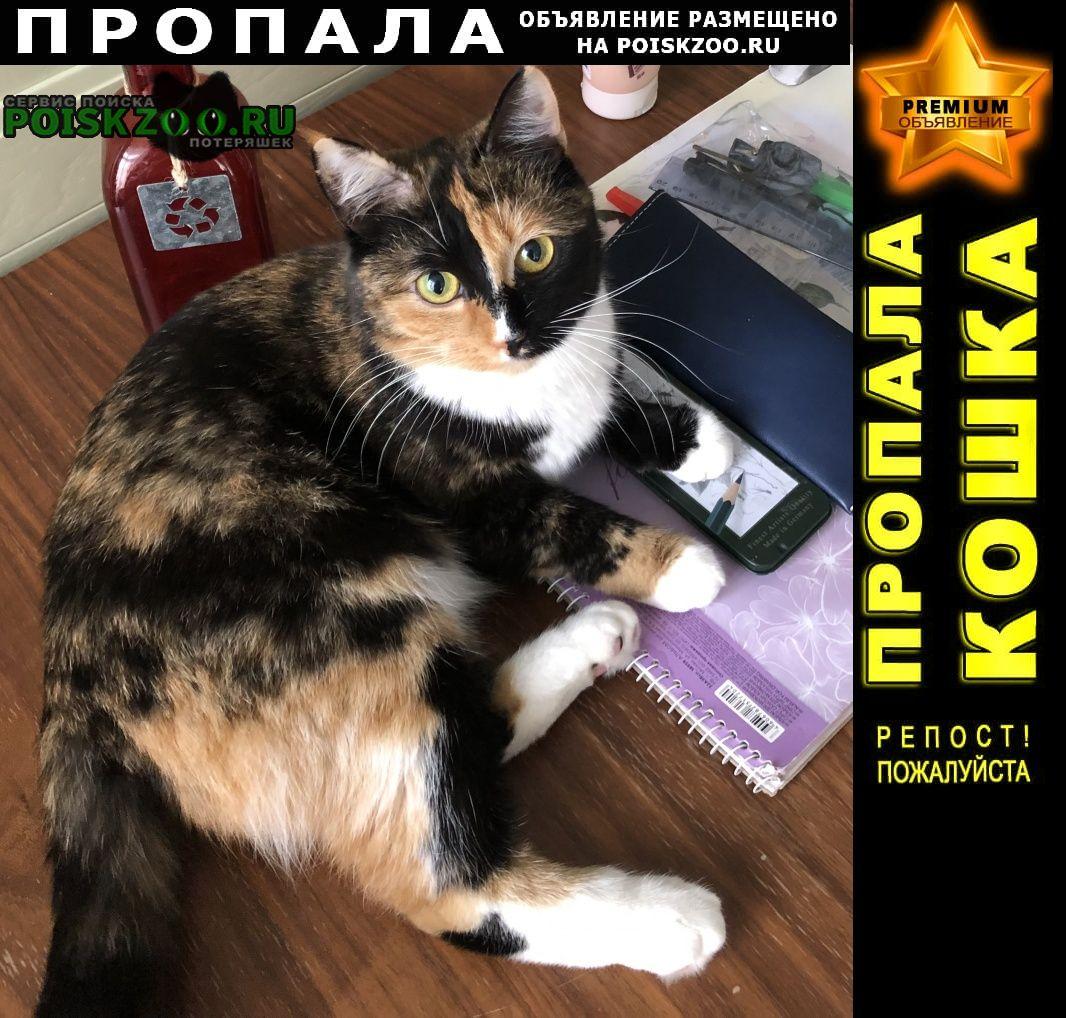 Пропала кошка Подольск
