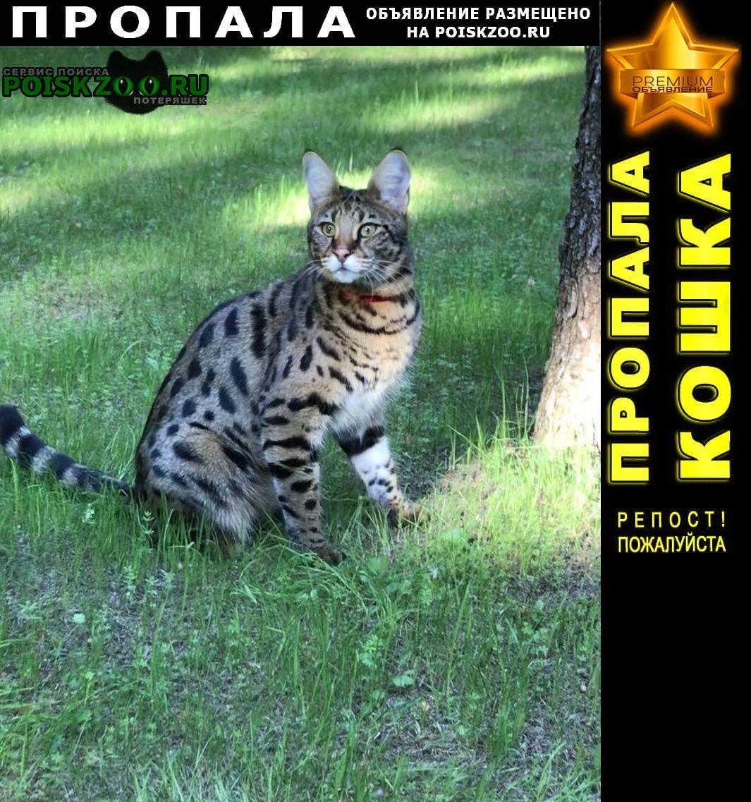 Пропала кошка вознаграждение Одинцово