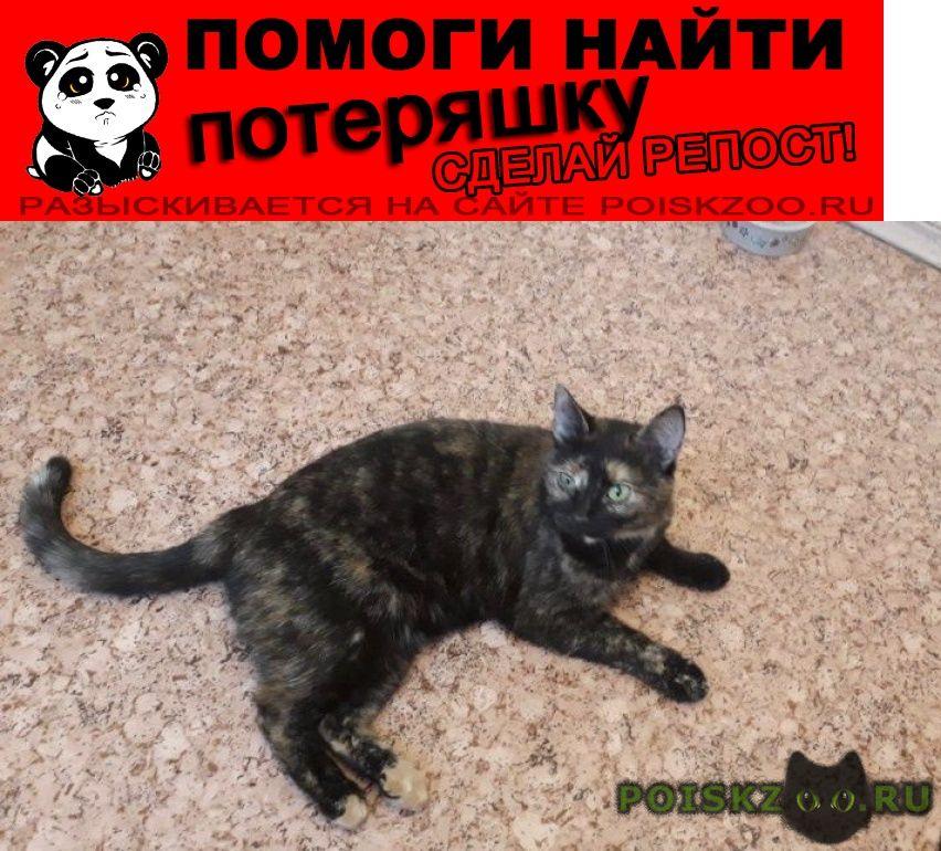 Пропала кошка внимание  г.Москва