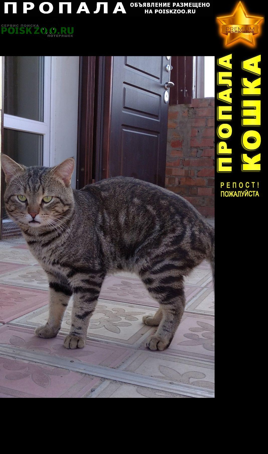 Пропала кошка любимый член семьи Ростов-на-Дону