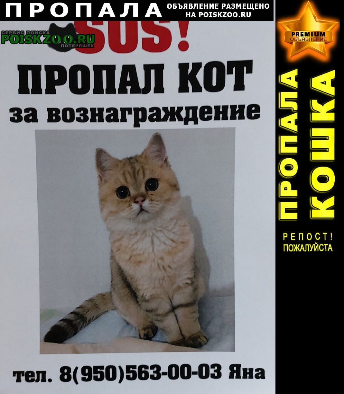 Екатеринбург Пропал кот ик