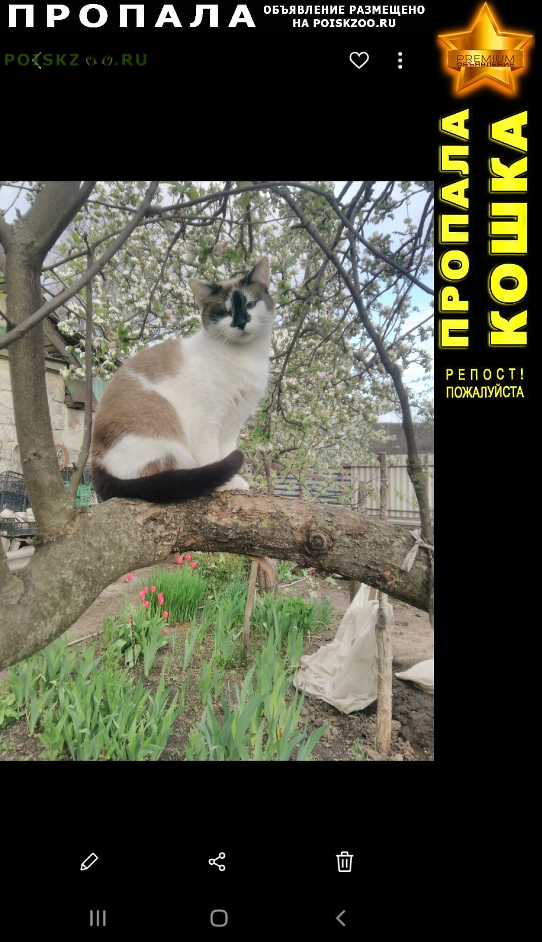 Пропала кошка домашняя Курск