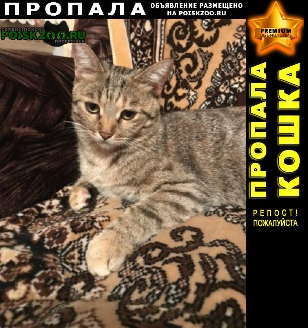 Рассказово Пропала кошка