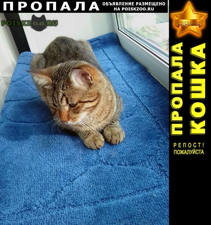 Пропал кот помогите   г.Ярославль