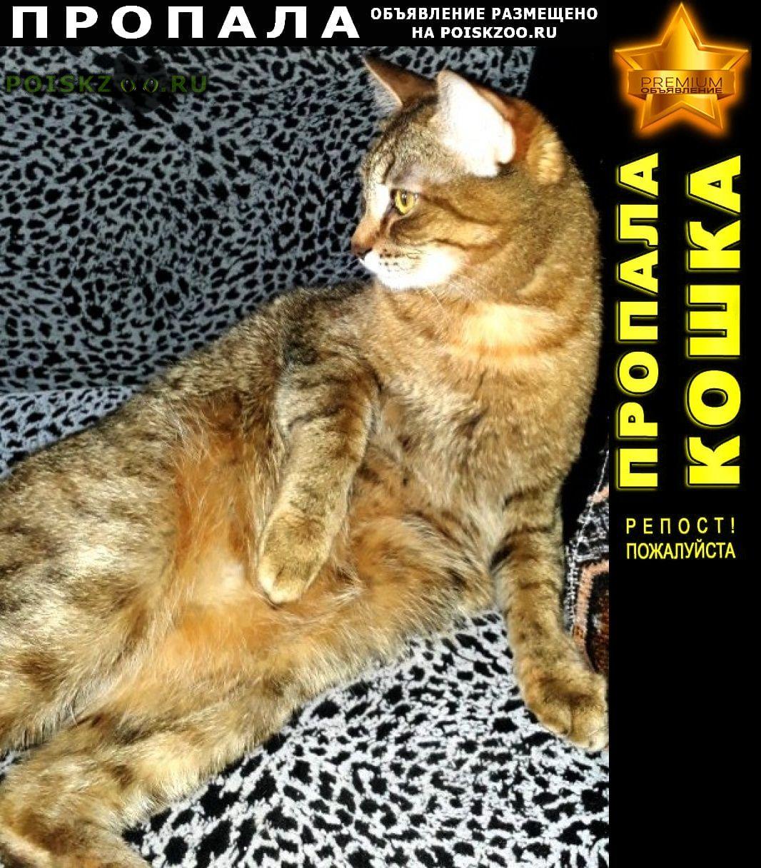 Пропала кошка sos Новосибирск