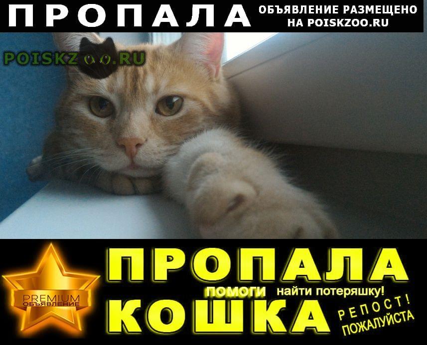 Пропал кот г.Мурманск