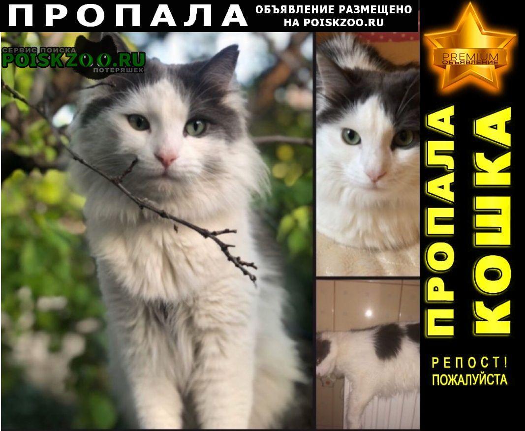 Пропал кот Симферополь