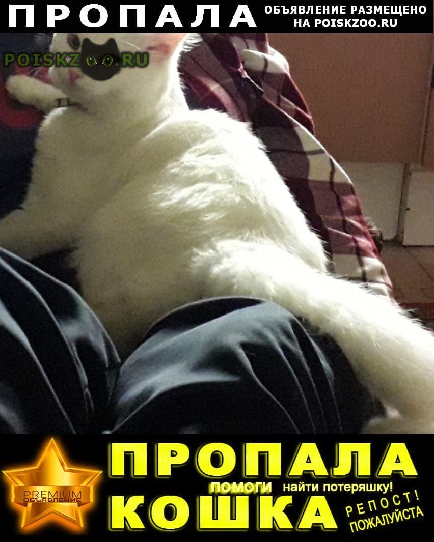 Пропал кот белый пушистый г.Краснодар