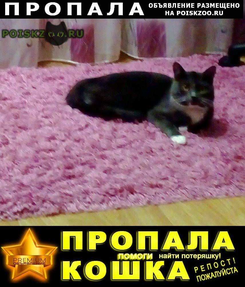 Пропала кошка и и котёнок  Хотьково
