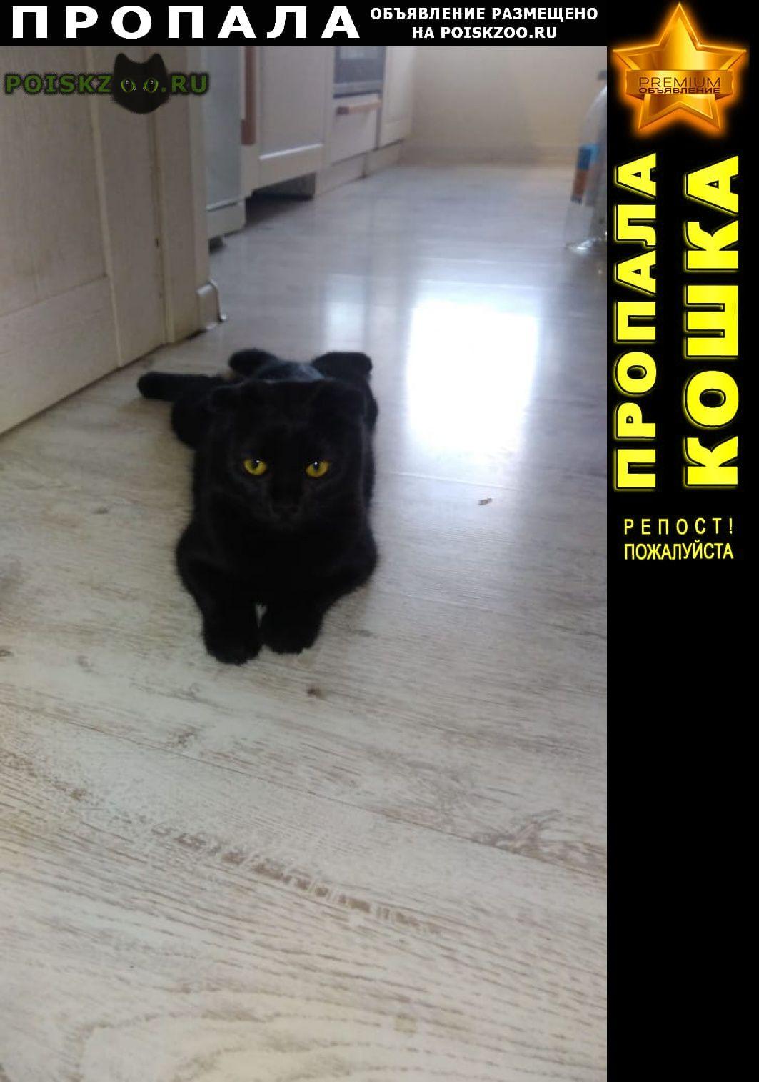 Пропала кошка шотландская вислоухая г.Краснодар