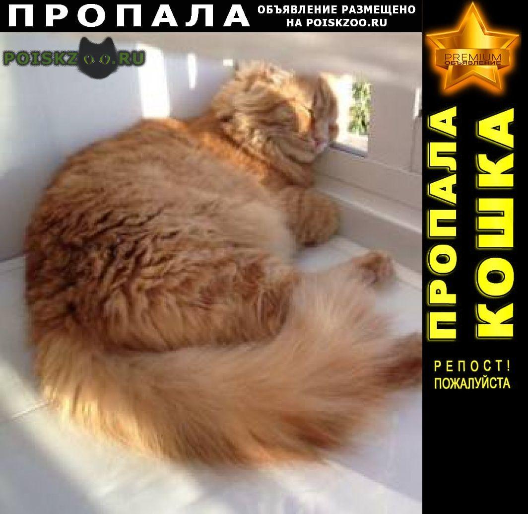 Пропала кошка большой рыжий кот Новокузнецк