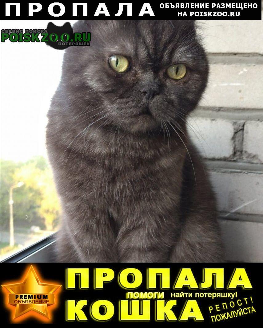 Красноярск Пропал кот видели 13, 09, во дворе школы 27 на ул.
