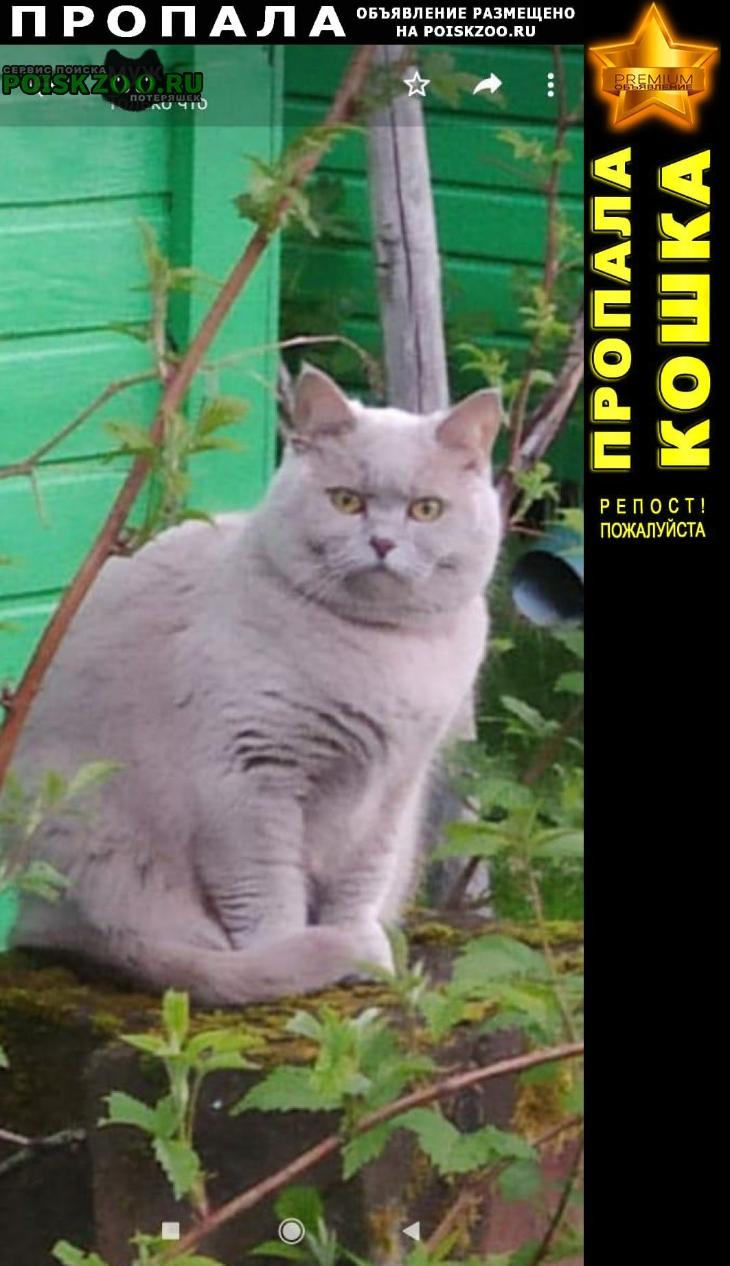 Пропала кошка тимоново. снт «заря» Солнечногорск