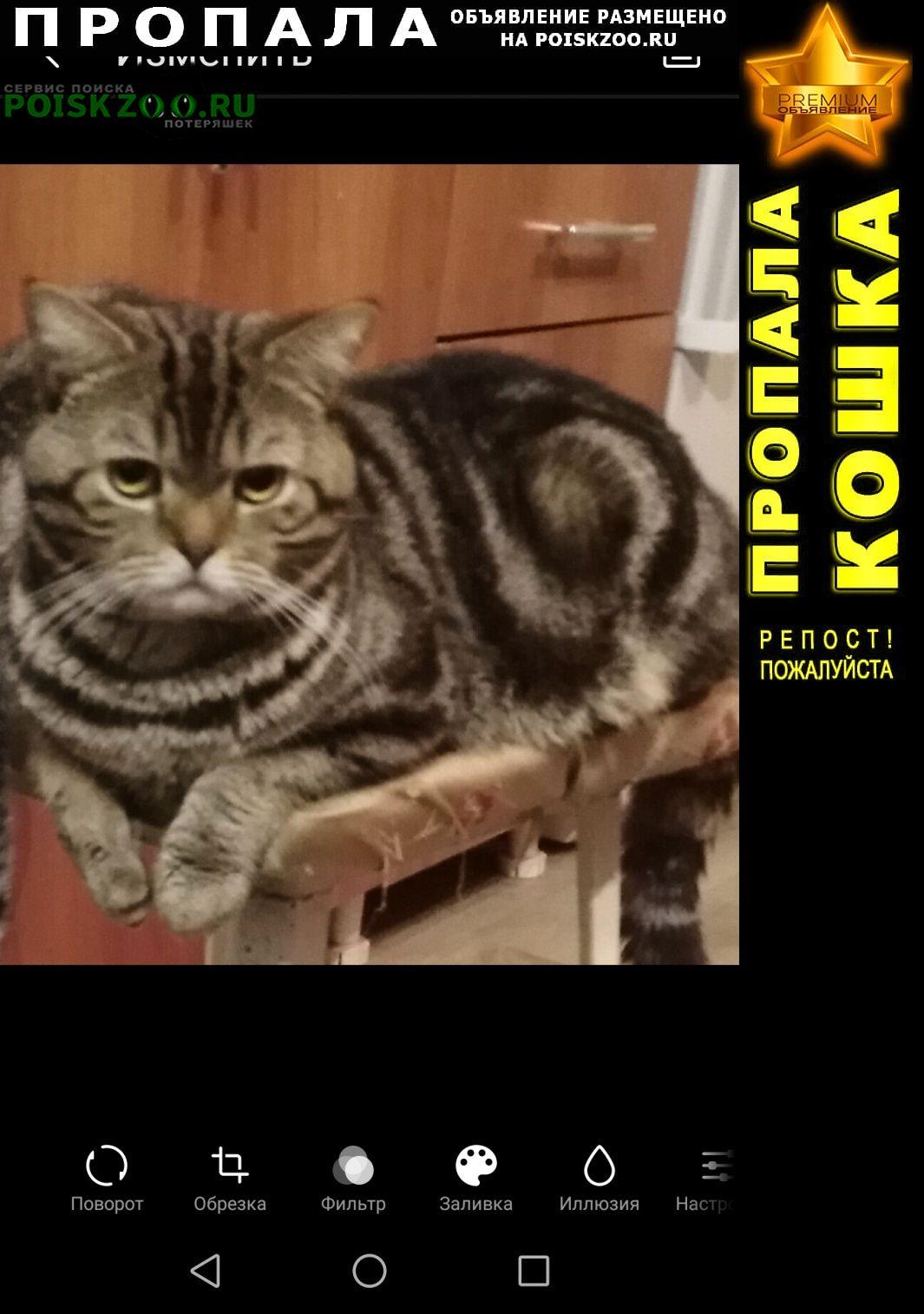 Пропал кот домашний на дачном участке г.Саратов