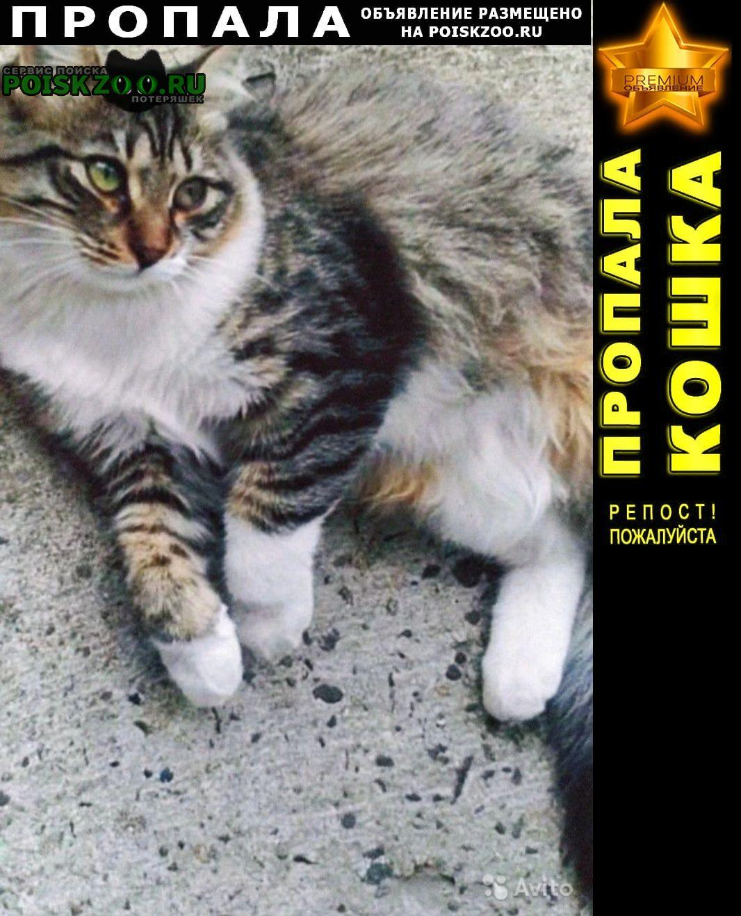 Пропала кошка стерелизованная г.Краснодар