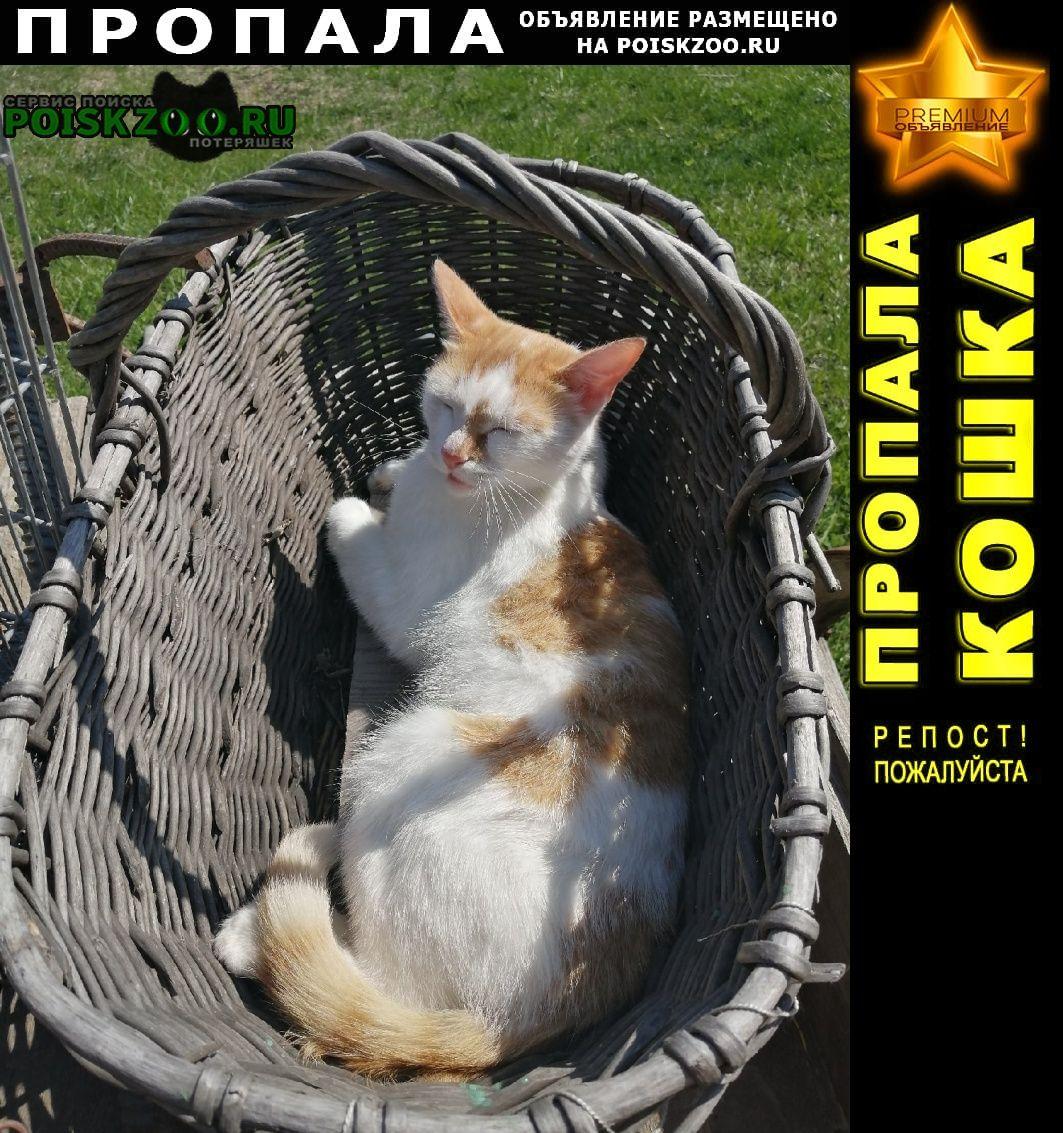 Пропал кот Казань