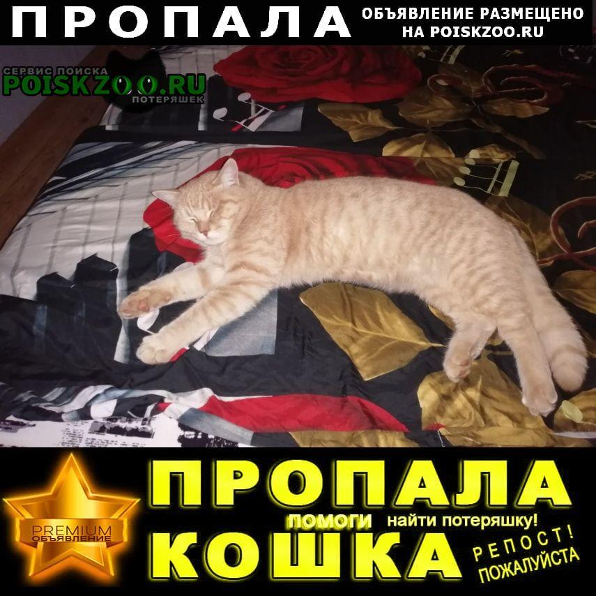 Пропал кот Челябинск